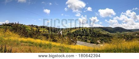 Aliso Viejo Wilderness Park view with yellow wild flowers and green rolling hills from the top hill in Aliso Viejo California United States