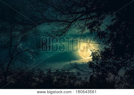 Silhouettes of dry trees against night sky with clouds and full moon over tranquil nature background. Landscape in the evening at national park. Beauty of nature. The moon were NOT furnished by NASA.