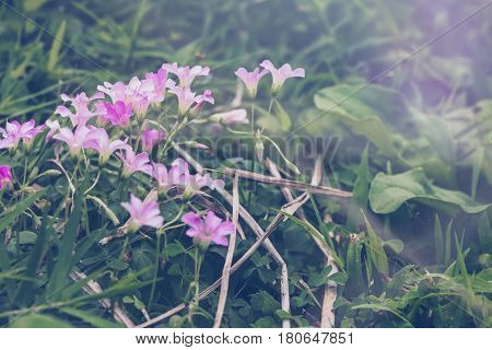 background nature Flower. Garden flowers. Pinkpurple flowers.