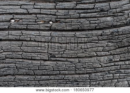 Surface of charred wood as a background