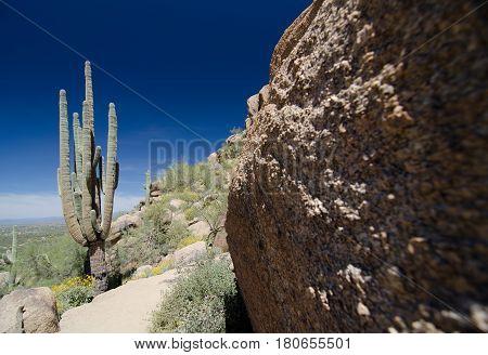 Saguaro And Granite Rock On Pinnacle Peak Trail