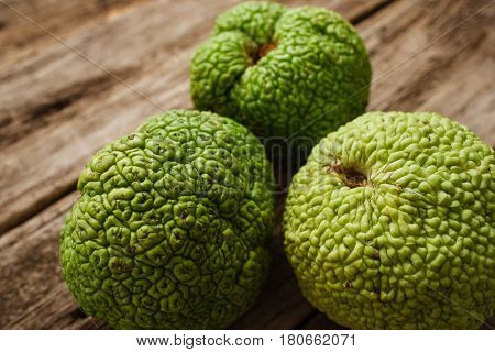 Osage Orange Apple Maclura Exotic Tropical Fresh Fruit Natural Decoration Alternative Medicine Pharmacology Concept