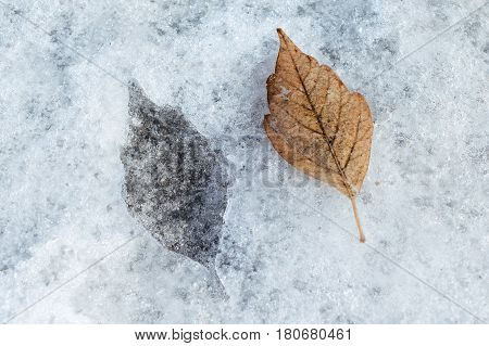 In the ice mark in the shape of a birch leaf. One sheet and one print. Spring day.