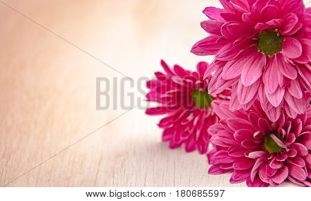 Pink Gerber flowers on white table under the morning sunlight