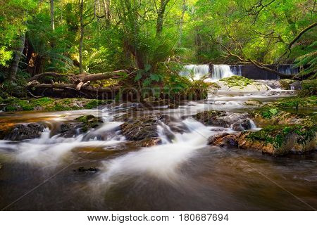 Rainforest and stream in the eastern region of Tasmania near the Bay of Fires. Tasmania, Australia.