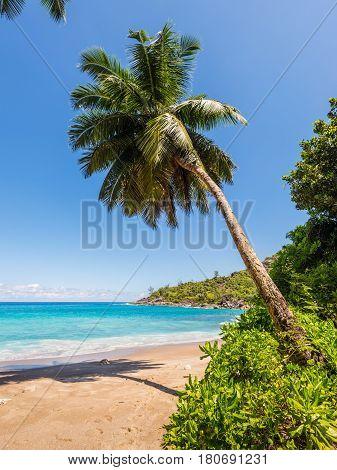 Dream Seascape Coast - Idyllic paradise palm Anse Major beach on the North-West side of Mahe Island Seychelles Indian Ocean Eastern Africa