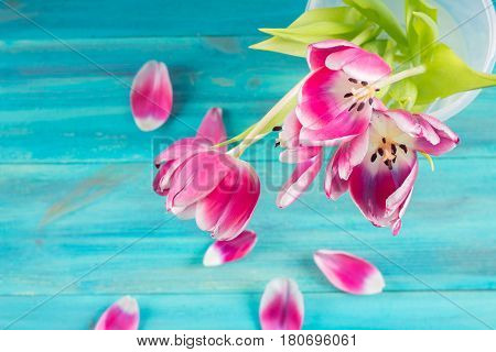 Withered Tulips In A Glass, Fallen Petals On A Blue Wooden Background
