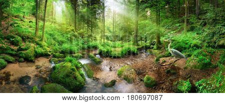 Enchanting panoramic forest scenery with soft light falling through the foliage a stream with tranquil water and a heron