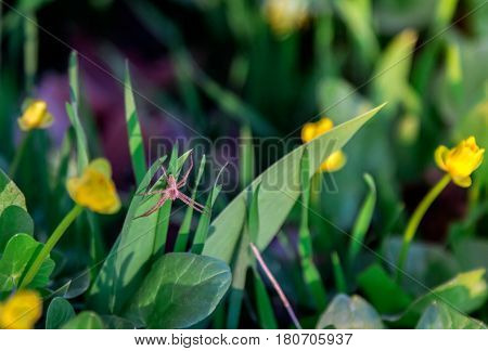 Small red spider sitting on a grass in sunlight