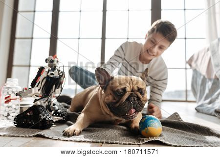 Give it to me. Thoughtful pug dog showing his tongue lying between robot and his young master while looking sideways
