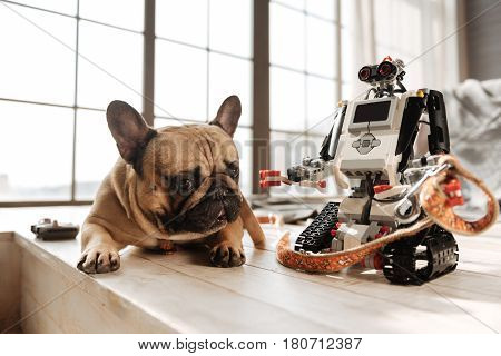 Want go for a walk. Interesting robot holding dogs lead while standing near his pet, that is looking straight on camera
