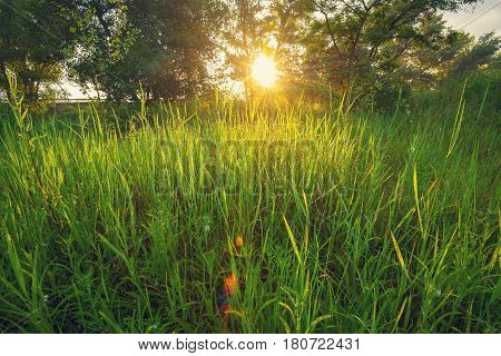 Sunrise Over Meadow Covered With Wildflowers And Green Lush Grass