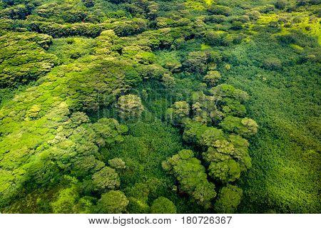 Aerial View Of Lush Green Forest Foliage, Kauai, Hawaii