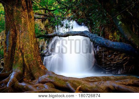 Landscape View Of Waterfall And Old Tree Near Road To Hana, Maui, Hawaii