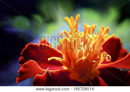 Bright Red Flower.