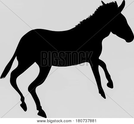 Hand drawn silhouette of a wild zebra on the run - Illustration, black isolated on white background