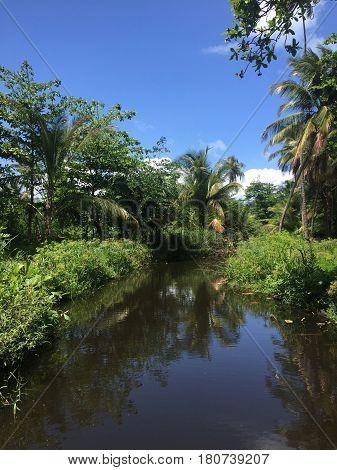 tropical mangrove vegetation in Luquillo, Puerto Rico