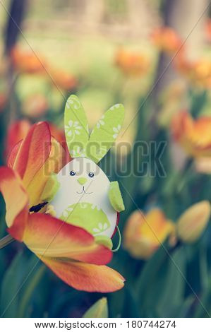 Cute bunny toy hidding among orange tulips. Easter time concept.
