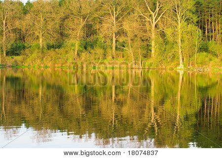 schöne Art des Flusses mit Betrachtung von Bäumen