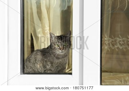 Cat sitting on windowsill indoor
