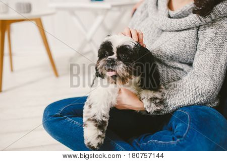Shih Tzu Sitting With People, A Dog And A Family,