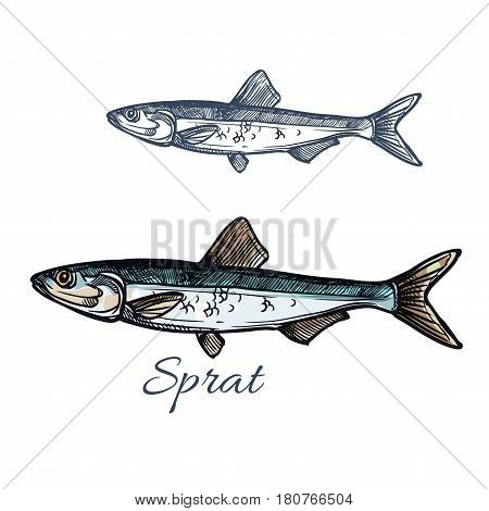 Sprat sketch vector fish icon. Isolated marine atlantic ocean sardine or sea anchovy fish species. Isolated symbol for seafood restaurant sign or emblem, fishing club or fishery market