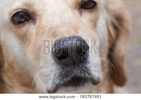 Closeup of a dog nose / pet animal