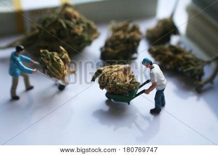 Marijuana ( Man Moving Bud With Wheel Barrow ) High Quality