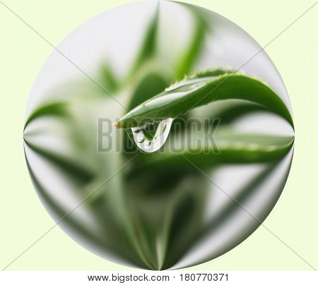Aloe Vera Plant In Sphere With Water Drop High Quality