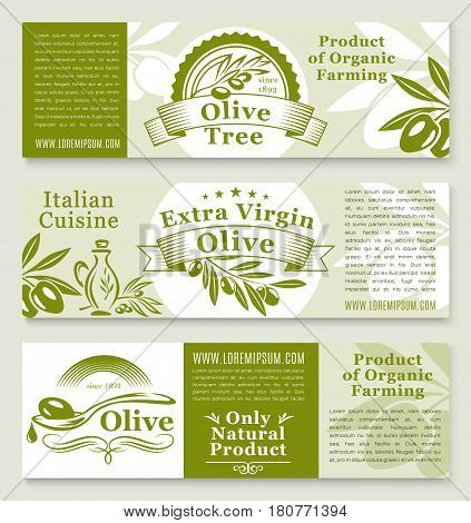 Olive oil product banners templates. Fresh green olive fruits nutrition for healthy Italian cuisine food cooking or extra virgin oil vector packaging and natural organic store