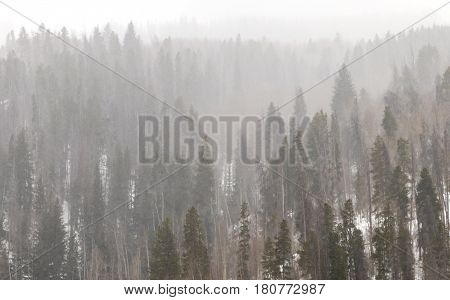 Snowy winter forest landscape background during a blizzard in the Colorado Rocky Mountains