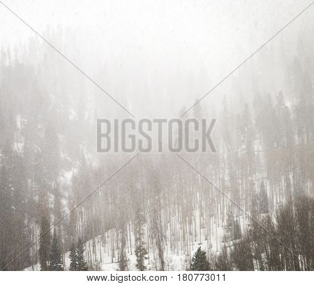 Winter forest landscape during whiteout blizzard conditions in the Colorado Rocky Mountains