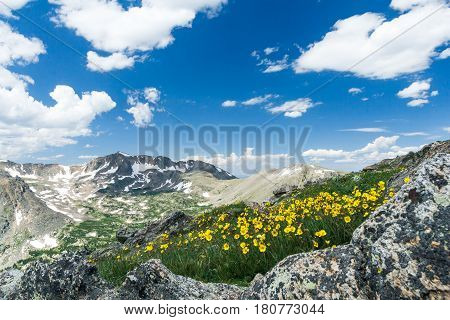 Wild flowers bloom along a trail in a colorful Colorado spring landscape on Arapahoe Pass in the Rocky Mountains
