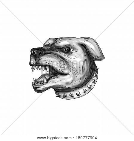 Tattoo style illustration of a Rottweiler Metzgerhund mastiff-dog guard dog head showing teeth growling set on isolated white background.