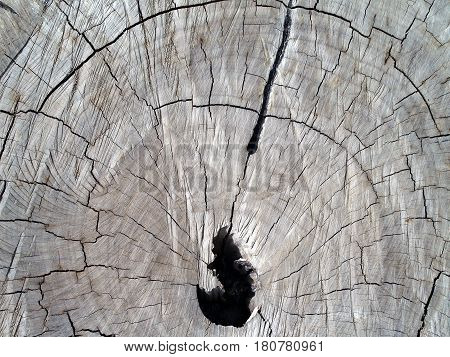 closeup old tree stump texture background, top view