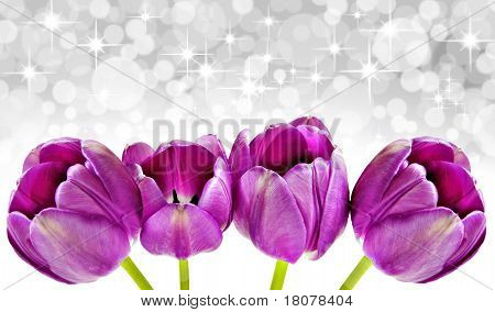 Spring Background Of Pink Tulips With Star Background