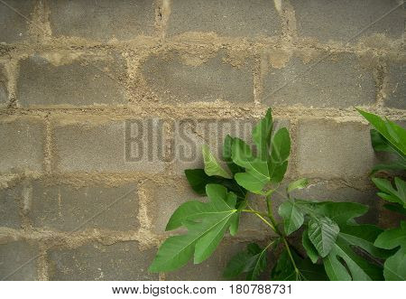 Masonry, stonework with bush in the corner. Classic stone texture suitable for all artwork.