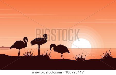 Vector illustration of flamingo on riverbank at sunset scenery illustration