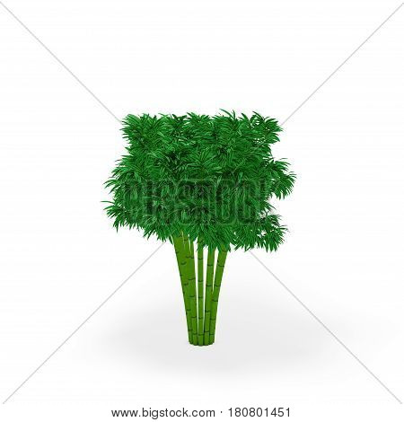 Bamboo tree. Isolated on white background. 3D rendering illustration.