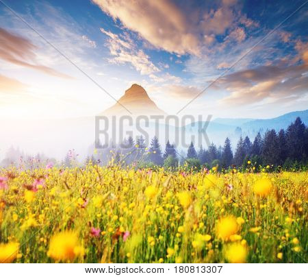 Scenic surroundings near the farm in the morning light. Gorgeous and picturesque scene. Location place Carpathian, Ukraine Europe. Wonderful wallpaper. Creative collage. Explore the world's beauty.