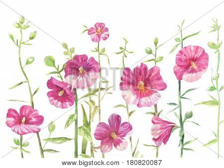 hollyhock drawing. Flowers isolated on white background.