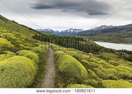 path through green bushes in patagonia mountains with grey sky, torres del paine chile