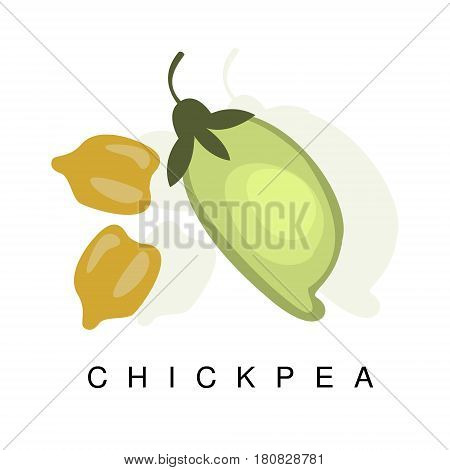 Chickpea Pod, Infographic Illustration With Realistic Pod-Bearing Legumes Plant And Its Name. Farm Natural Food Product Vector Drawing With Description.