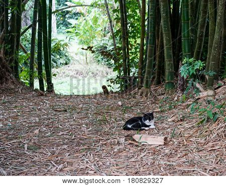Avenue with bamboo. in the middle of the image on the garden path between the bamboo is a cat resting