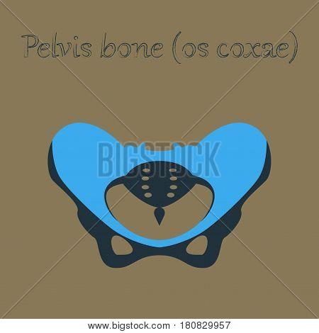 human organ icon in flat style pelvic bones