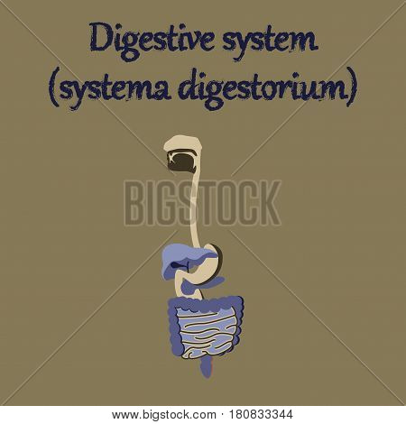 human organ icon in flat style digestive system