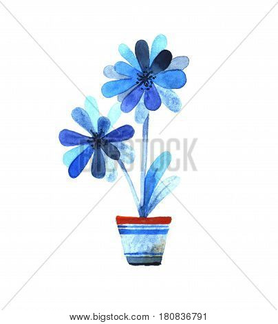 Blue flowers in a pot. Watercolor illustration