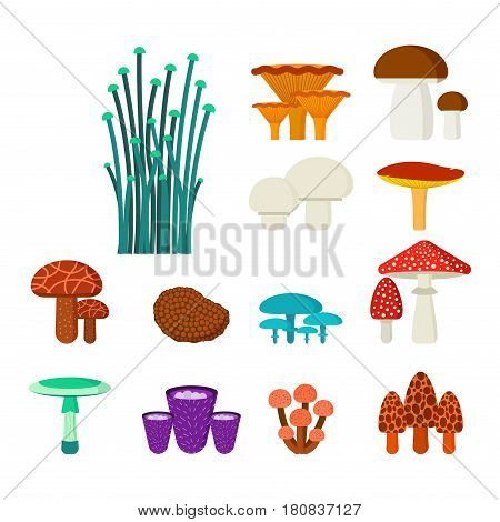 Mushrooms for cook food and poisonous nature meal vegetarian healthy autumn edible and fungus organic vegetable raw ingredient vector illustration. Gourmet eating drawing grow plant.