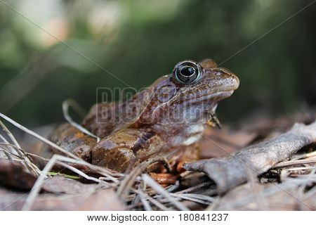 A frog waking up in the spring. Waking up in the spring reptiles after winter anabiosis.