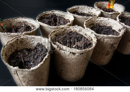 Peat Pots for Seedlings. Few of Seedlings Cups with Soil.